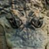 skulblakadurna's avatar