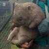 skulkish's avatar