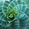 SkvaderArts's avatar
