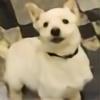 sky-wolf-othar's avatar