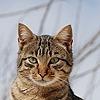 Skylanddraw's avatar