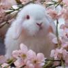 SleepLilly's avatar