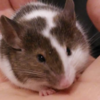 SleepyVirus's avatar