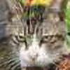 SleepyZm's avatar