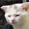 sliceofcat's avatar