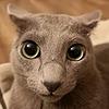 Sltpuddling's avatar