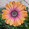 Smagodrag7's avatar