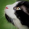 smailshine's avatar