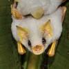Smallfrydt's avatar