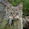 smalthorn's avatar