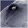 SMOKE-SIGNALS's avatar