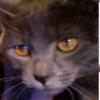 SmudgyTheCat's avatar