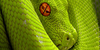 SnakesandSerpents's avatar