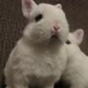 SnickerGraphy's avatar