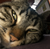 snoozecat's avatar