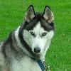 Snowdog3852's avatar