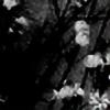 Snowwynne's avatar