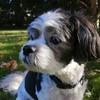 Sofia-i-Eftychia's avatar