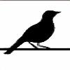 SongBird55's avatar