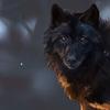 Sophywolfy's avatar