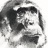 Soposoposopo's avatar