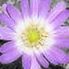 SorykoPhotos's avatar