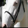 SoulessWhispers's avatar