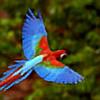 soumyadeepbshn's avatar