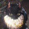 SoyaKo's avatar