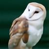 space-owl's avatar