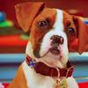 sparkthedog8's avatar