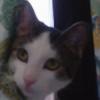 Sparky-Sumi's avatar