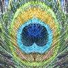 SparkyBlueBird's avatar