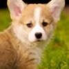 SpeckleSplashh's avatar