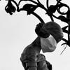 spectacledfruitbat's avatar