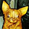 speedbui's avatar