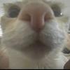 sphxs's avatar