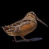 spjot52's avatar