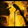 splinterblade02's avatar