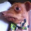Splotchiez's avatar