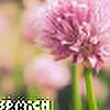 spmich's avatar