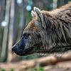 Spottedhyenabr's avatar
