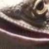 SpruccTheFish's avatar