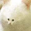 SquareGlasses's avatar