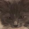 SquidkillaROBLOX's avatar