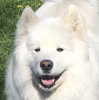 Squishykinz's avatar