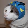 sscarlt's avatar