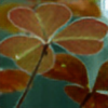 sshadowplay's avatar