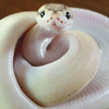 SsideWinDerR's avatar