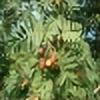 starchim01's avatar